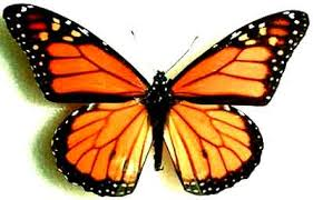 dale fehringer the orange and black butterfly