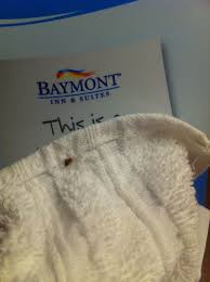 Bed Bugs In Sofa by Connecticut Bed Bug Hotel And Apartment Reports Bedbugreports Com