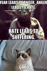 Angry Cat Good Meme - the grumpiest grumpy cat memes to sadden your day snappy pixels