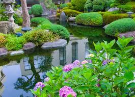 australian native water plants nualgi ponds safely controls algae u0026 promotes fish health
