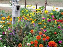 why we love old fashioned zinnias flea market gardening