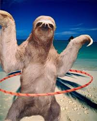 Funny Sloth Pictures Meme - sloth meme funny sloth images and dirty sloth memes