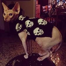 sphynx sweaters sphynx cat
