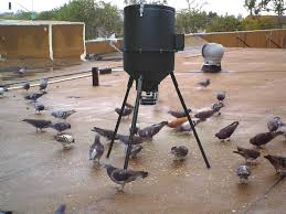 How To Get Rid Of Pigeons Off My Roof by Ovocontrol P Pigeon Birth Control Bird Barrier