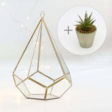 metal u0026 glass gold tear drop terrarium with free glittered cactus