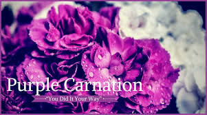 Purple Carnations 10 Best Funeral Flowers Ultimate Guide Love Lives On