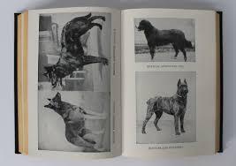 belgian sheepdog akc akc the complete dog book omero home