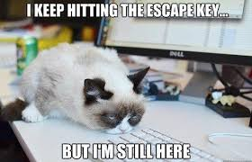 Cat Internet Meme - 15 internet famous cats who might be related to grumpy cat techeblog