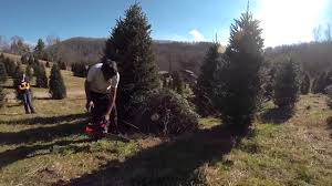 2012 christmas tree u0027what fir u0027 tree farm gopro hero 3 youtube
