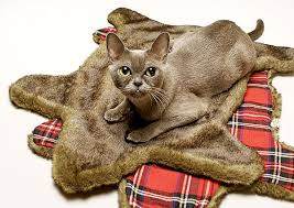 the faux bearskin blanket from loyal luxe is to purr for catster