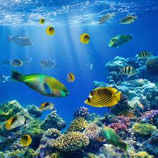 tropical ocean fish