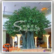 atb008 large decorative garden lanscaping ficus tree