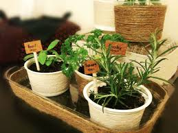 Indoor Herbal Garden Mini Indoor Herb Garden 9 Steps With Pictures