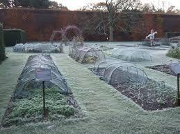 Vegetable Garden In Winter by Benjamin Dell U2013 Botanics Stories