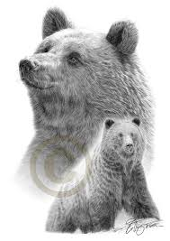 grizzly bears pencil drawing print a3 size artwork signed