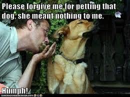 Forgive Me Meme - please forgive me for petting that dog