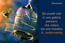 uccelli in gabbia aforismario皰 uccelli 100 aforismi frasi e proverbi