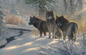 three amigos mark keathley wolf wolves snow winter nature