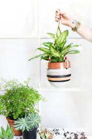 194 best indoor gardening images on pinterest gardening plants