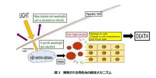 Blue Light Wavelength Tohoku University Team Discovers Blue Light Is Effective At
