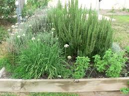 herb gardening for beginners australia home outdoor decoration