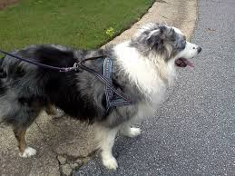 guide dog harness best dog harness in the world youtube