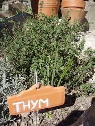 thym serpolet cuisine thym serpolet thymus fiche plante