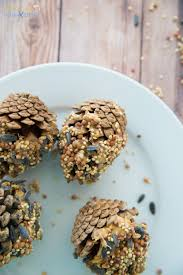 how to make the best pine cone bird feeder natural beach living