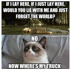 Grumpy Cat Snow Meme - 166 best grumpy cat images on pinterest funny kitties funny stuff