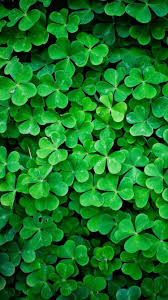 4 leaf clovers iphone 7 wallpaper 750x1334