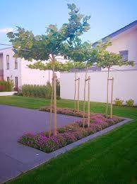 Steingarten Mit Granit Beet Eingefasst In Die Terrasse Mit Platanen Als Sonnenschutz Und