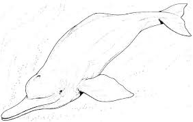 printable dolphin images printable dolphin coloring pages dolphin picture to color for kids