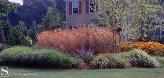ornamental grasses stecks nursery and landscaping