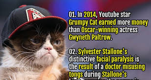 Grumpy Cat Has Died Youtube - 50 random facts list 74 fact republic