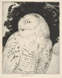 file portrait snowy owl met dp832887 jpg wikimedia commons