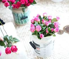 peony flower delivery peony flower arrangement peony flower delivery i9life club