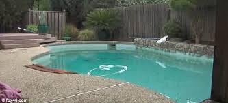 Deep Backyard Pool by Father And Son 2 Die After Toddler Fell Into The Pool And Dad