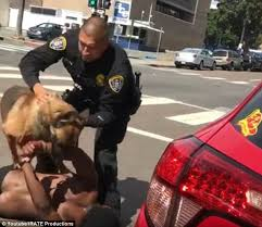 k9 mauls suspects arm daily mail online