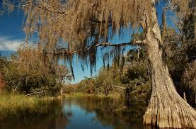 landscape view peninsular florida landscape conservation
