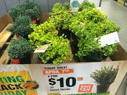 home depot black friday spring sale great buys on shrubs garden