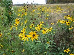 native plants of michigan sportsman u0027s camp to heal war vets michigan now