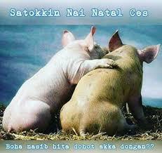 Meme Babi - 5 ekspresi ketakutan hewan ini jelang natal dan tahun baru