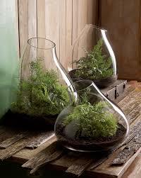 modern glass terrarium indoor garden planter terraria garden