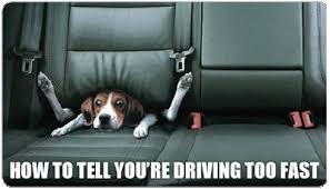 Dog Driving Meme - how to tell when you re driving too fast funny dog meme humor