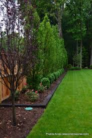 Backyard Privacy Ideas Purple Tree And Border Along The Back In Front Of The Cedars To