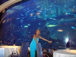 excitement n net underwater restaurant in dubai al mahara