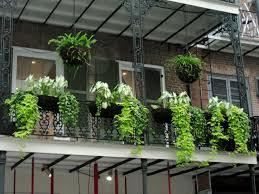 balkon grã npflanzen balkonpflanzen je nach balkonausrichtung wählen richtig pflegen