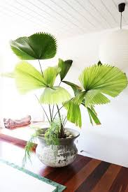 Our Favorite Plants How To by 1975 Best Plants Images On Pinterest Plants Houseplants And