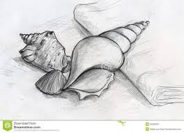 easy still life to draw 10 best ideas about seashell drawings on