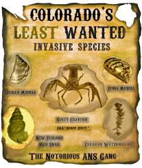native plants of colorado colorado u0027s least wanted profiles of some of the most destructive